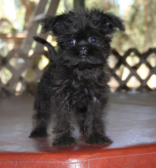 Dogs And Puppies For Sale Aberdeen