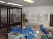 Fertile Parrots Eggs and Parrots For Sale