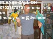 baby macaws is 3 years old.she is a female for adoption